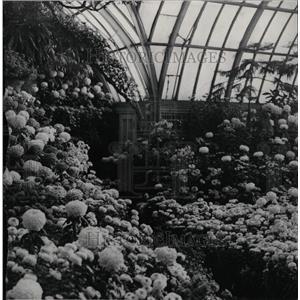 1932 Press Photo Chrysanthemeums Show Detroit - RRW99297