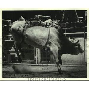 1980 Press Photo Bull Rider Roy Carter from Crockett, Texas, Falling at Rodeo