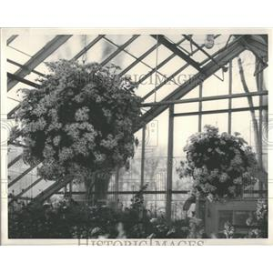 1935 Press Photo Chrysanthemums show at Detroit.