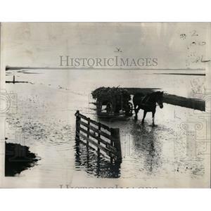 1939 Press Photo Holland Netherlands Flooded Road Horse - RRX78109