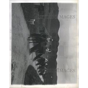 1956 Photo Okinawa Farmers Haul Bamboo Sticks - RRX93207