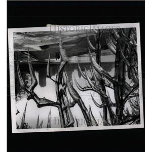 1961 Press Photo Chicago Snow Syline - RRW64295