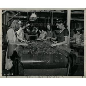 1946 Press Photo Strawberries on TVA Experimental Barge - RRY59191