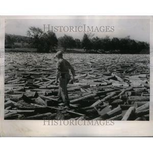 1955 Press Photo Berlin lumber firm Logg Scogging River - RRU32321