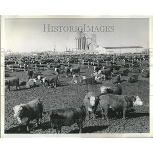 1967 Press Photo W D Farr - RRV24305