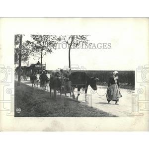 1918 Press Photo Refugees Fleeing Scene Along The Marne
