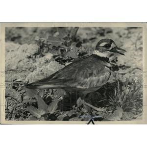 1939 Press Photo Birds in Michigan - RRW70435