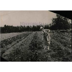 1919 Press Photo Mrs Jess Willard in Her Garden - nea59312