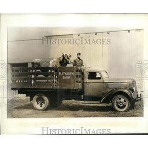 1937 Press Photo Raemelton Yankee, pedigreed Guernsey sire of Playhaven Farm