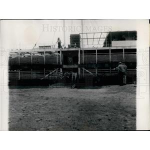 Press Photo A Cattle Ship in Argentina