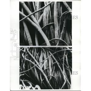 1970 Press Photo Fibers of wool rug studied to determine where dirt hides