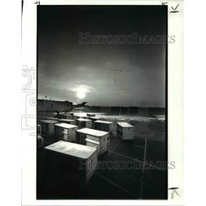 1986 Press Photo Empty Baggage Carts On United Airlines Tarmac
