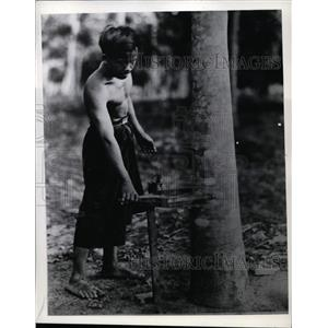 1941 Press Photo A rubber tree & native tapping the sap on Sumatra plantation