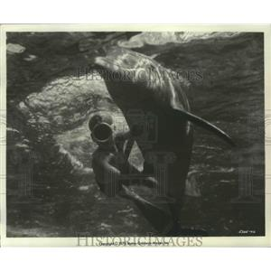 1964 Press Photo Flipper starring Luke Halpin & dolphin Flipper - lfx01297