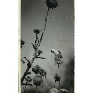 1978 Press Photo Bong Air Force Base. Birds such as the Goldfinch are numerous