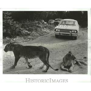 1983 Press Photo Givskud Lion Park, Vejle, Denmark - ftx02090