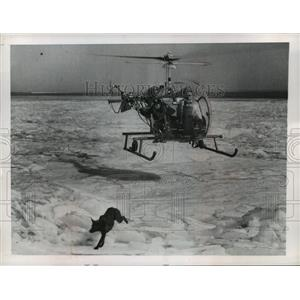 1961 Press Photo Lariat Swinging Chicago Animal Welfare Officer on Helicopter